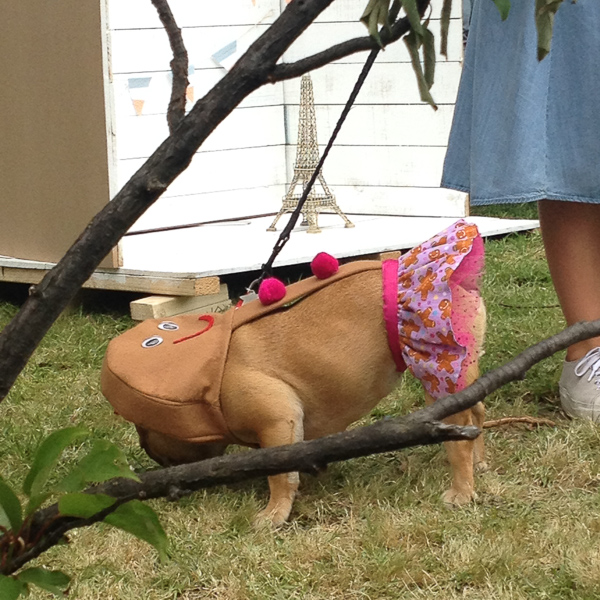 Melbourne French Festival bulldog competition